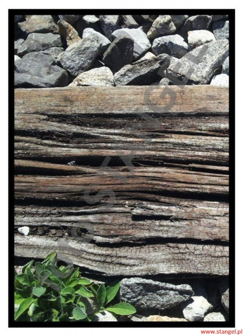 """""""DREWNO w sosie kamienno-roślinnym"""" czyli podkład kolejowy w parowozowni.  Heilbronn 09.2012. foto T. Stangel 2012"""